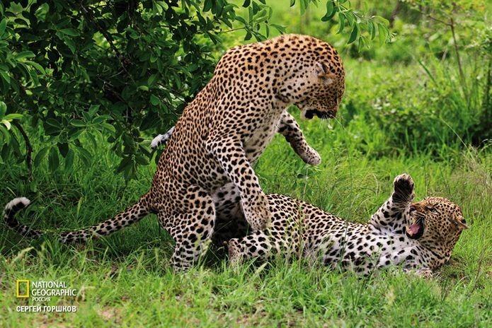Фотовыставка «Живая природа Ботсваны» 13
