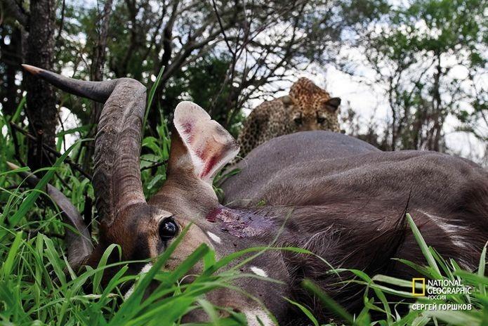 Фотовыставка «Живая природа Ботсваны» 15