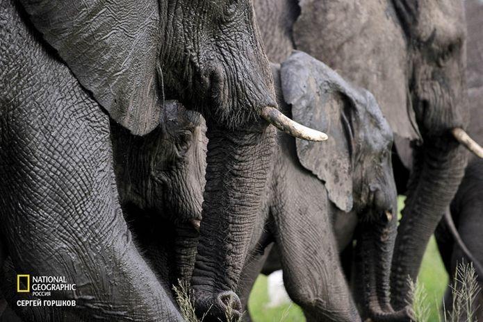 Фотовыставка «Живая природа Ботсваны» 18
