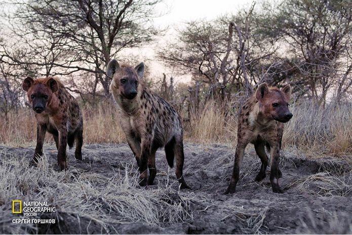 Фотовыставка «Живая природа Ботсваны» 20