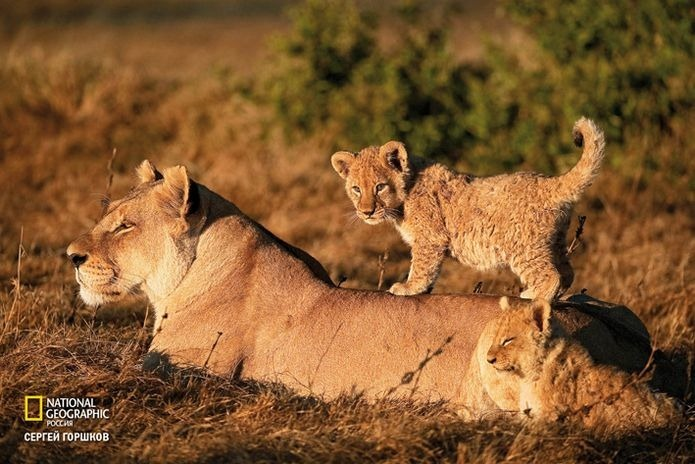 Фотовыставка «Живая природа Ботсваны» 21