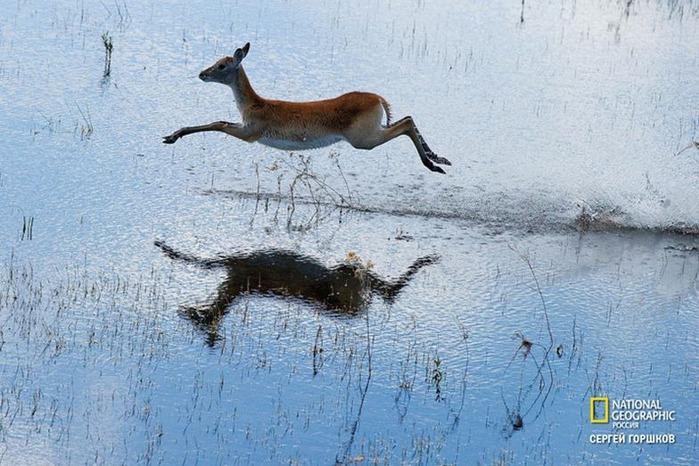 Фотовыставка «Живая природа Ботсваны» 25