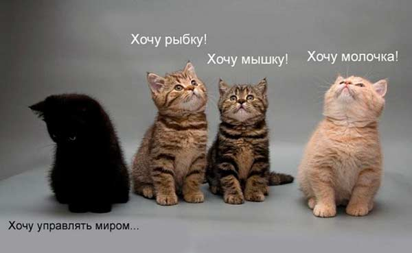 Котята управлять миром (600x369, 19 Kb)