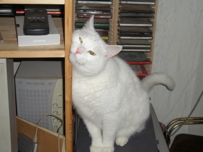 Старый белый кот