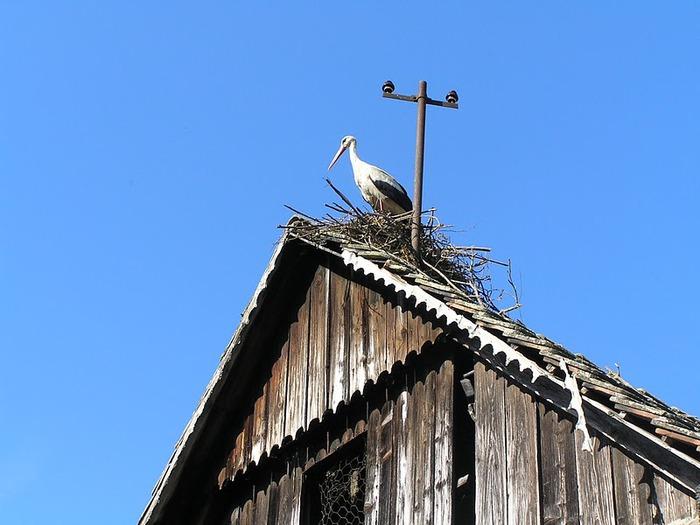 Деревянные дома в заповедном болоте - «Лоньско поле» 21995