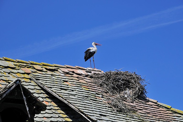 Деревянные дома в заповедном болоте - «Лоньско поле» 64781