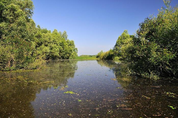 Деревянные дома в заповедном болоте - «Лоньско поле» 69847