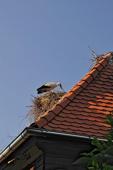 Деревянные дома в заповедном болоте - «Лоньско поле» 33919