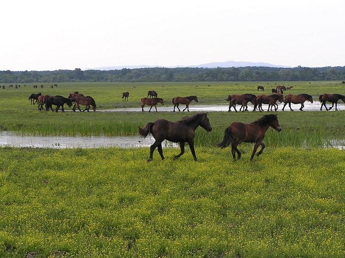 Деревянные дома в заповедном болоте - «Лоньско поле» 13896