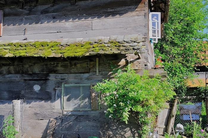 Деревянные дома в заповедном болоте - «Лоньско поле» 78277