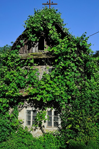 Деревянные дома в заповедном болоте - «Лоньско поле» 56654