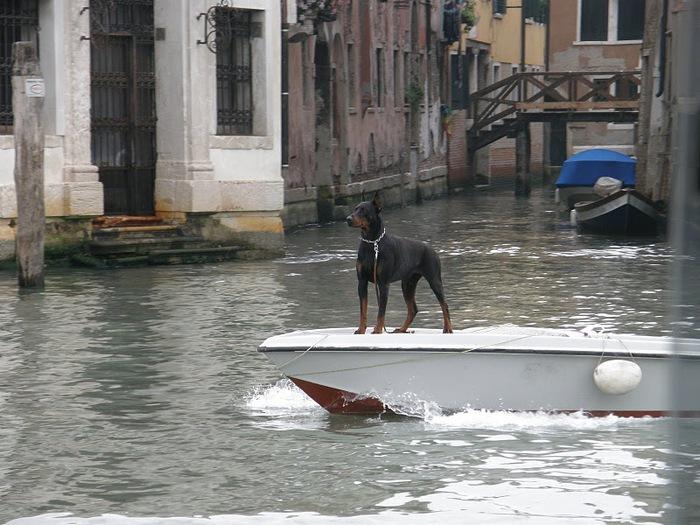 Венеция — сказка 71750
