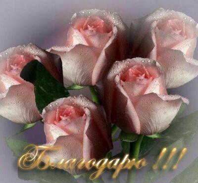 Розы (400x370, 26 Kb)