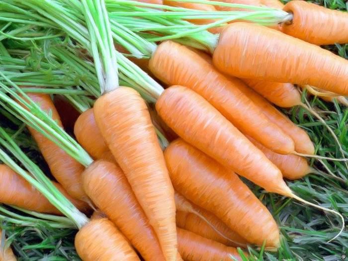 Какого цвета морковь