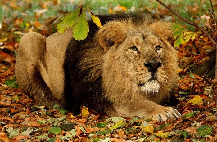 Animals-В мире животных 59262