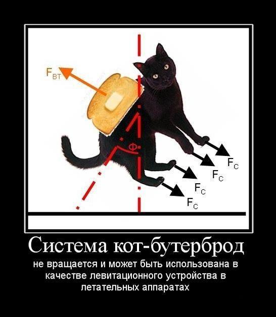 Кошки и физики