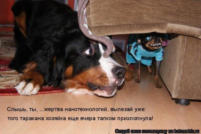 http://img0.liveinternet.ru/images/attach/c/2//69/784/69784349_2e04dcdc7298c3f3dbcf15af56f28b3b.jpg