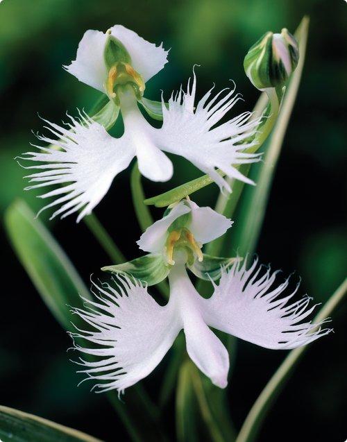 Причудливые цветы орхидей не...