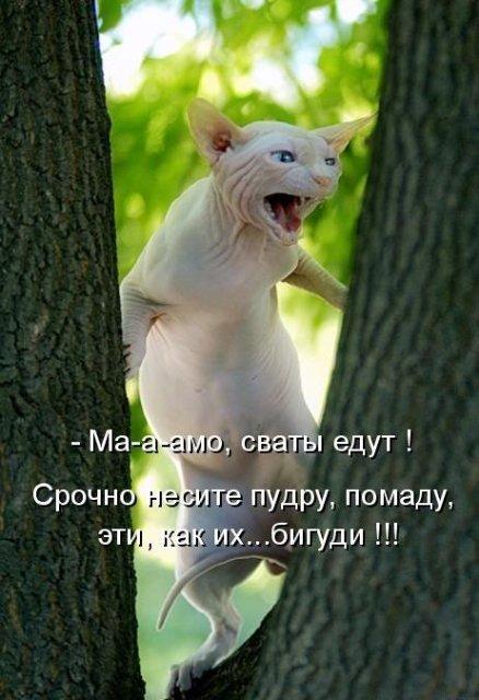 http://img0.liveinternet.ru/images/attach/c/2//69/960/69960636_1cbee9065d60.jpg