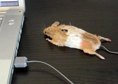 мышь (385x275, 82 Kb)