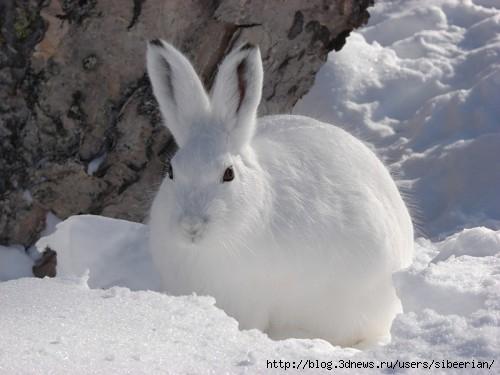 Праздник белого месяца самое интересное в блогах
