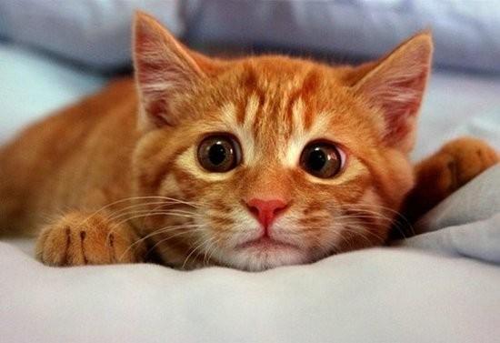 Дурной кот
