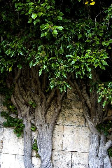 Монастырь Санта Мария де Бонаваль - Monasterio de Santa Maria de Bonaval 53795