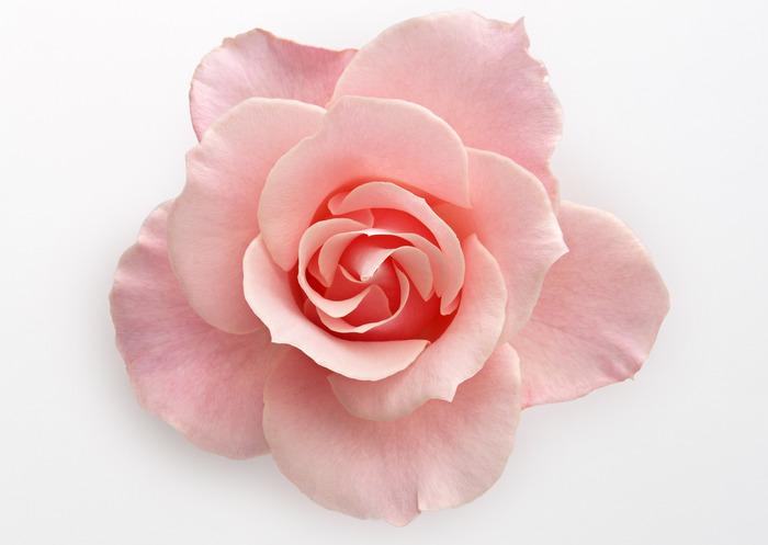 клипарт цветок: