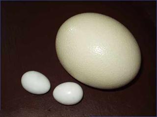 яйца (320x240, 48 Kb)