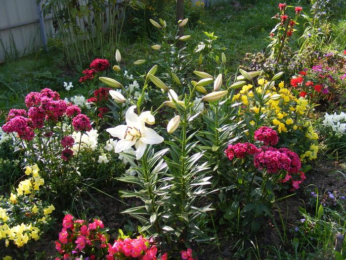 лилии и розы на одной клумбе фото