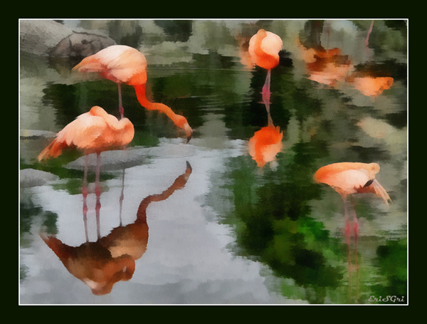 11_flamingo_04 (600x455, 214 Kb)