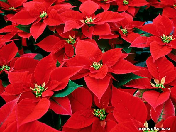 Красные цветы названия