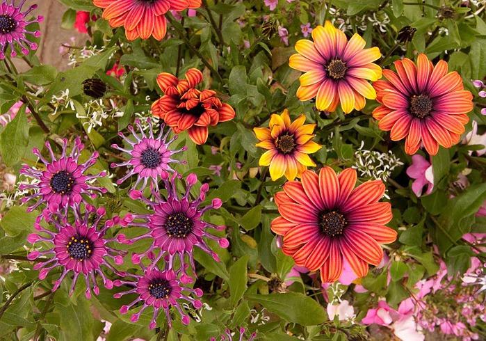 Цветочное настроение. 15467