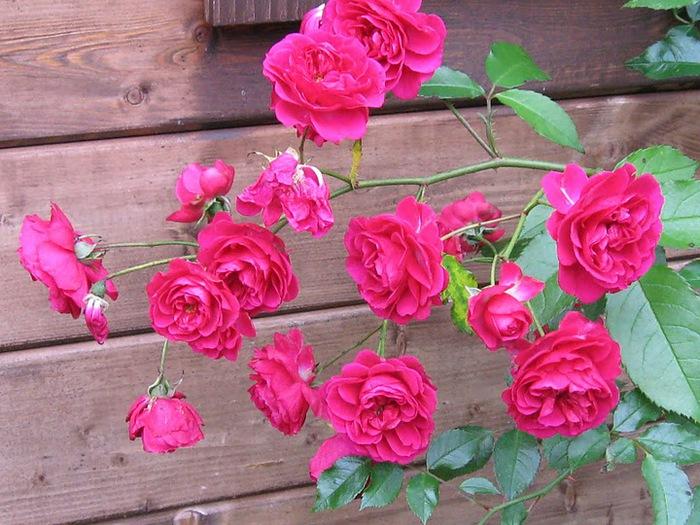 Цветочное настроение. 20135