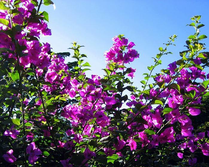 Цветочное настроение. 65424