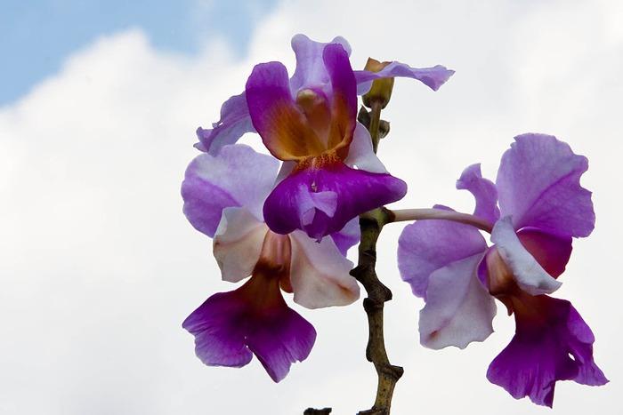 Цветочное настроение. 50501