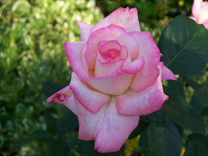 Цветочное настроение. 46453
