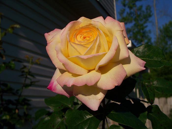 Цветочное настроение. 52832