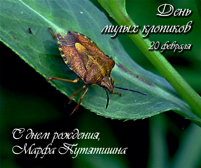 http://img0.liveinternet.ru/images/attach/c/2//70/937/70937804_1298160489_20fevralya2011.jpg