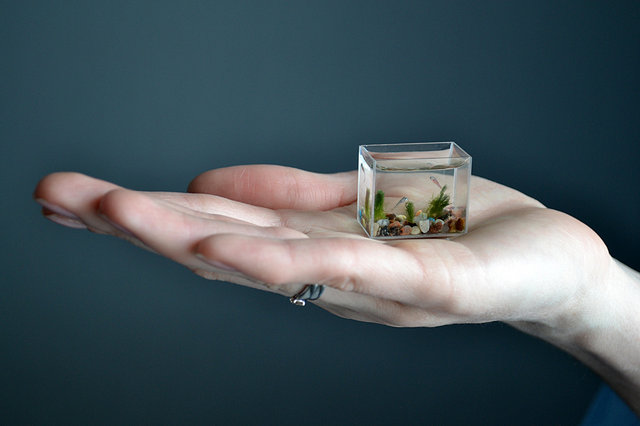 самый маленький аквариум в мире