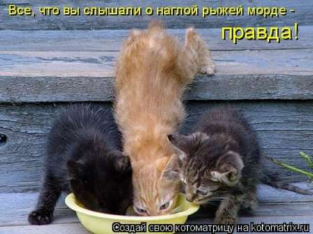 http://img0.liveinternet.ru/images/attach/c/2//71/122/71122227_1298486364_1293475194_1293310879_1293174711_kotomatrix_27.jpg