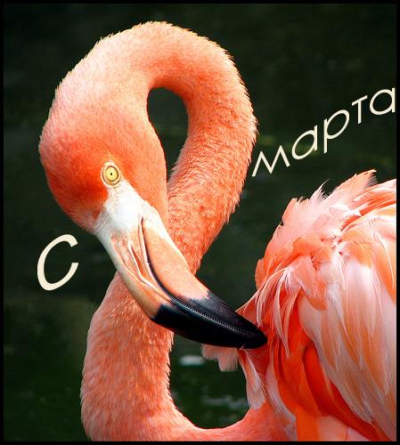 Фламинго счастья