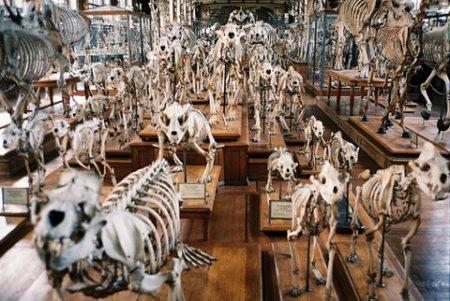музей скелетов