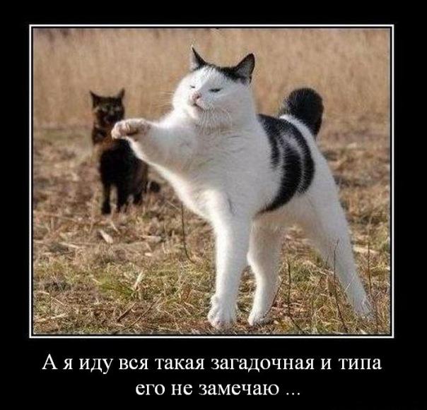 http://img0.liveinternet.ru/images/attach/c/2//71/302/71302229_1298806258_x_a2e1e008.jpg