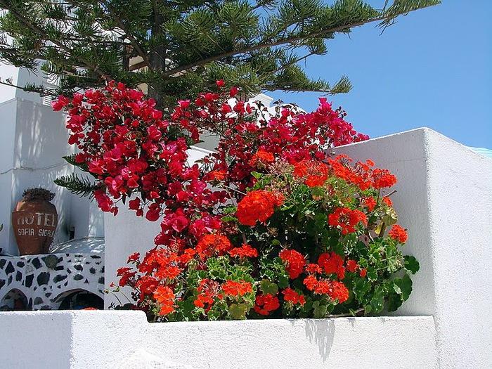 Остров Санторини – вулканическая красота. 72950