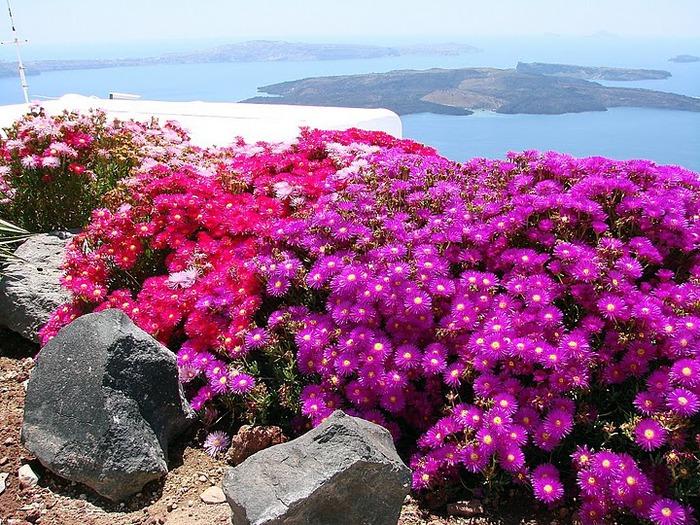 Остров Санторини – вулканическая красота. 50210