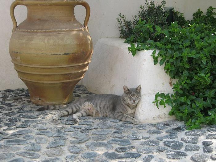 домашниe животные на острове Санторин 26449