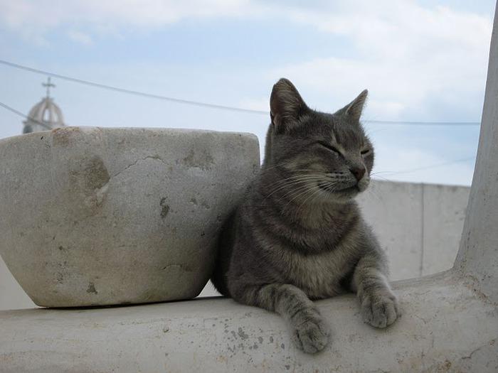 домашниe животные на острове Санторин 32404