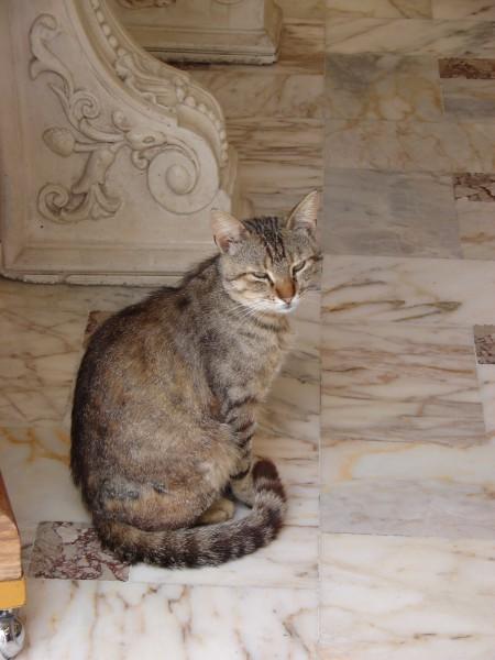 домашниe животные на острове Санторин 14583
