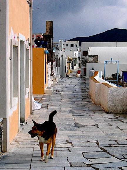 домашниe животные на острове Санторин 61872